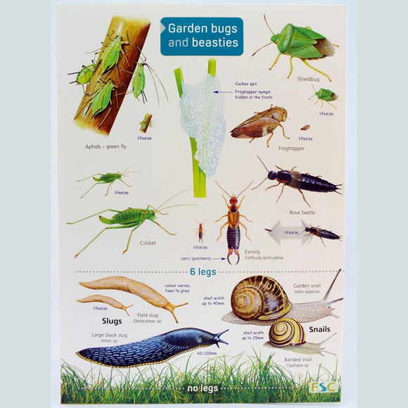 Field Guide to Garden Bugs and Beasties - The Nature Bug