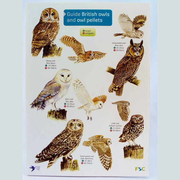 Field Guide to Owls and Owl Pellets - The Nature Bug