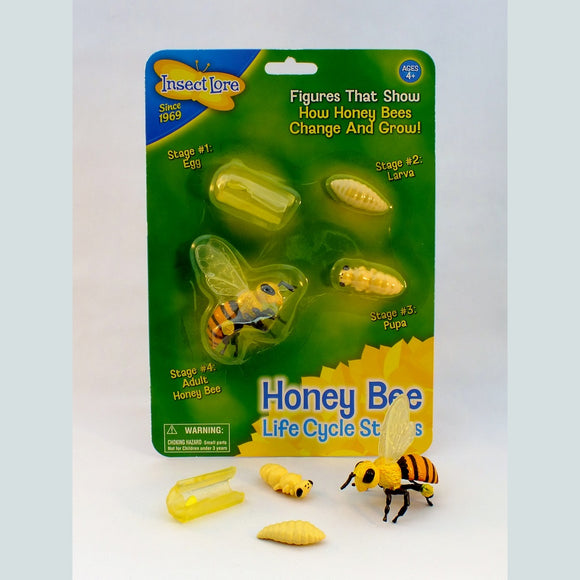 Honey Bee Life Cycle Figures - The Nature Bug