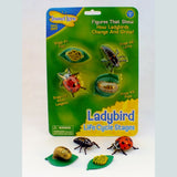 Ladybird Life Cycle Figures - The Nature Bug