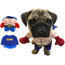 Cat and Small to Large Dog Boxer Costume