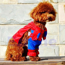 Cat and Dog Spider-Man Costume
