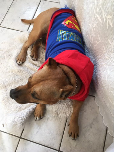 Large Dog Superman Hoodie