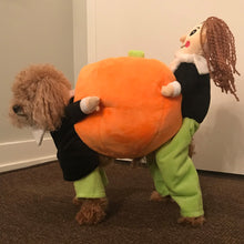 30% OFF - LIMITED TIME OFFER - Pumpkin Dog Costume - 2-9kg Dog