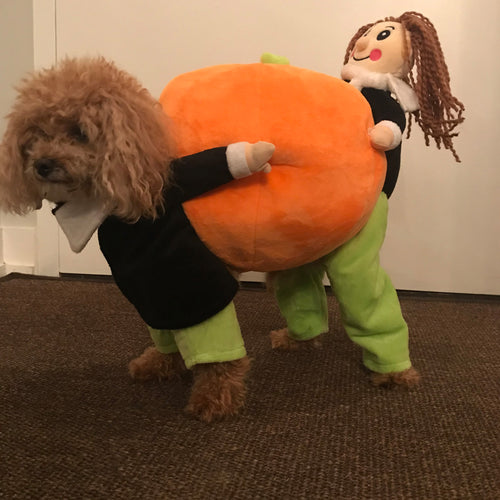 Pumpkin Dog Costume - 2-9kg Dog