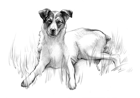 Pencil Pet Portrait - PetPortraits.com