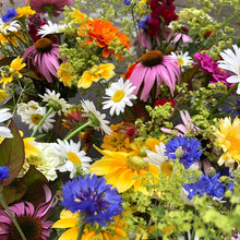 Organic Flower Seedlings- Annuals