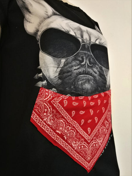 Cool Dog - Nili`s