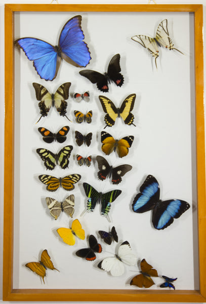 22 Simple + 2 Morpho Butterflies
