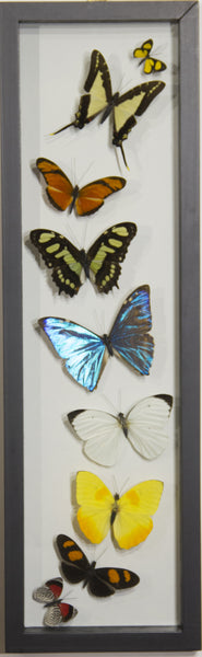 8 Simple +1 Small Morpho Butterfly