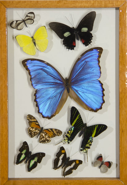 8 Simple + 1 Morpho Butterfly