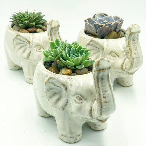 Elephant Pot - Small