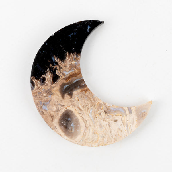 Petrified Palm Root Moon