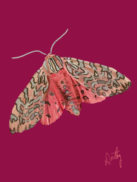 Moth 1 Wall Art