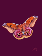 Moth 3 Wall Art