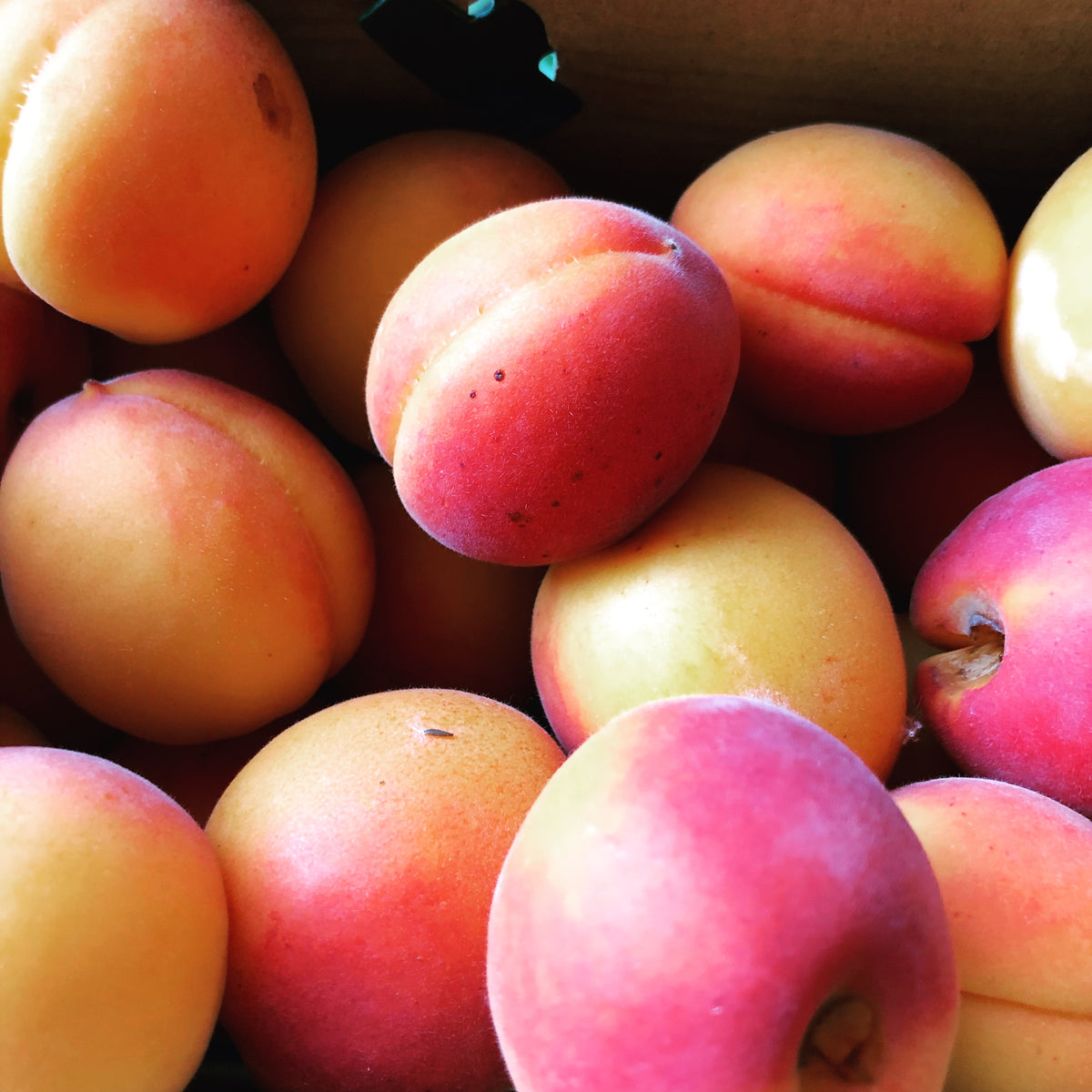 Waterloo - Half Box (10lbs) - Apricots