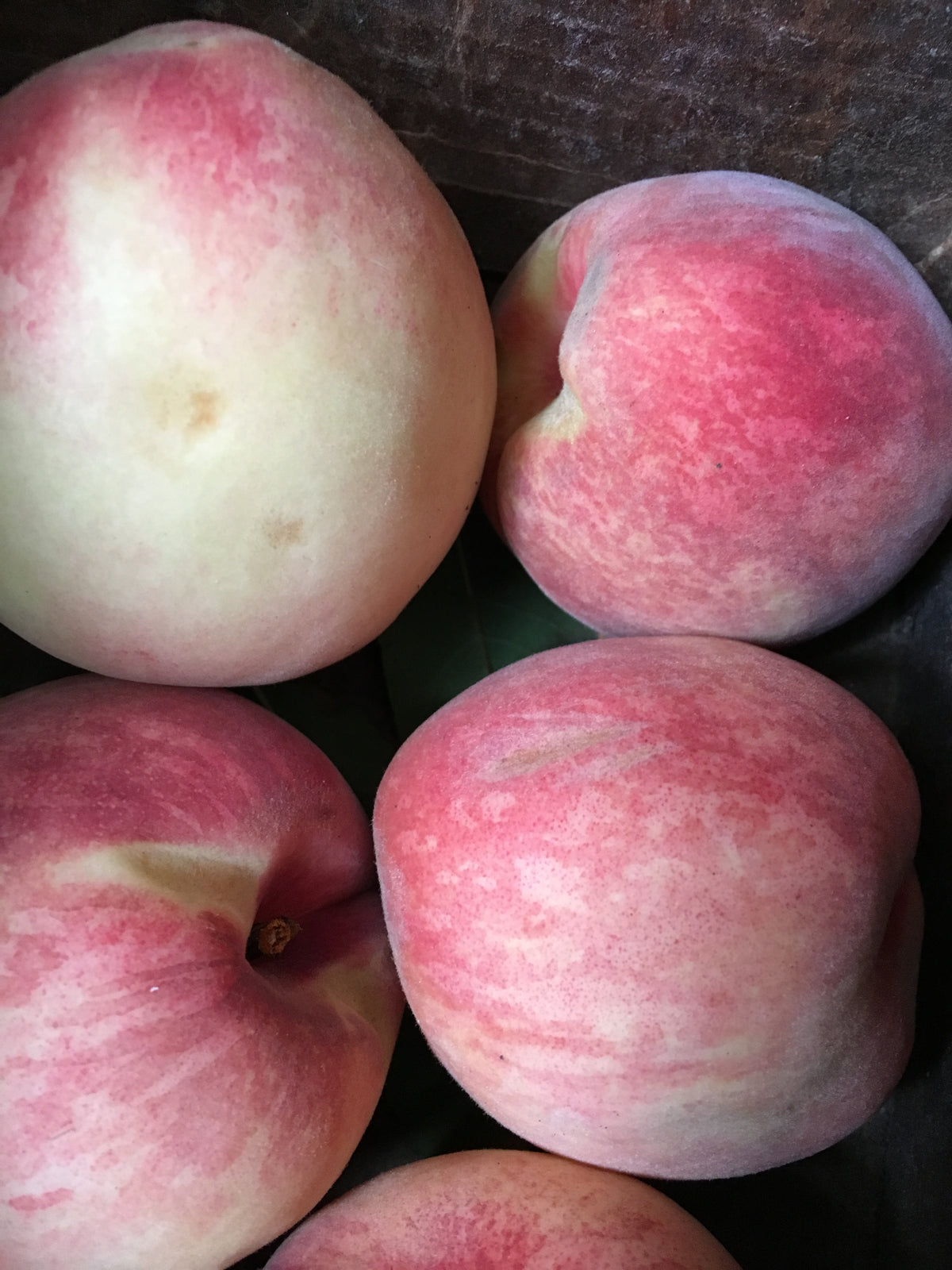 Fertile Ground Tiffany Rose White Flesh Peach (12/13lbs)