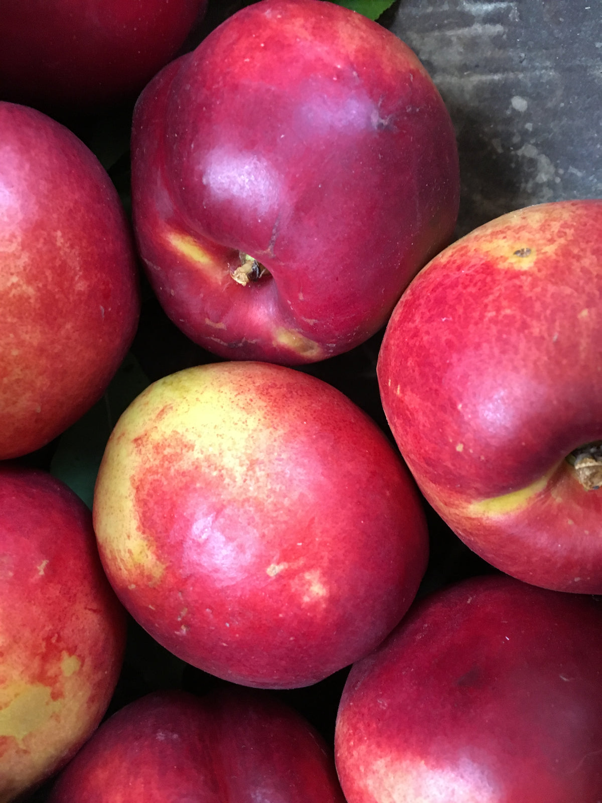 Kitchener Nectarines Half Box (12/13lbs)