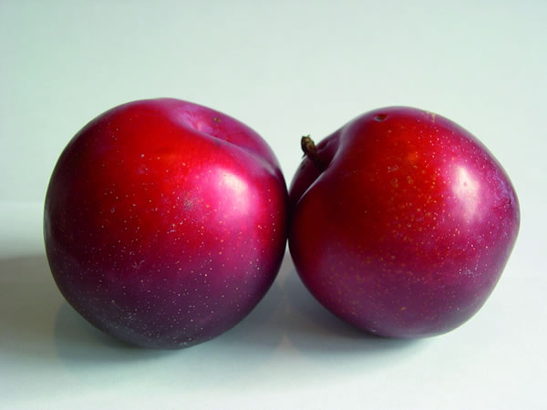 Fertile Ground Fortune Plums Half Box (12/13lbs)