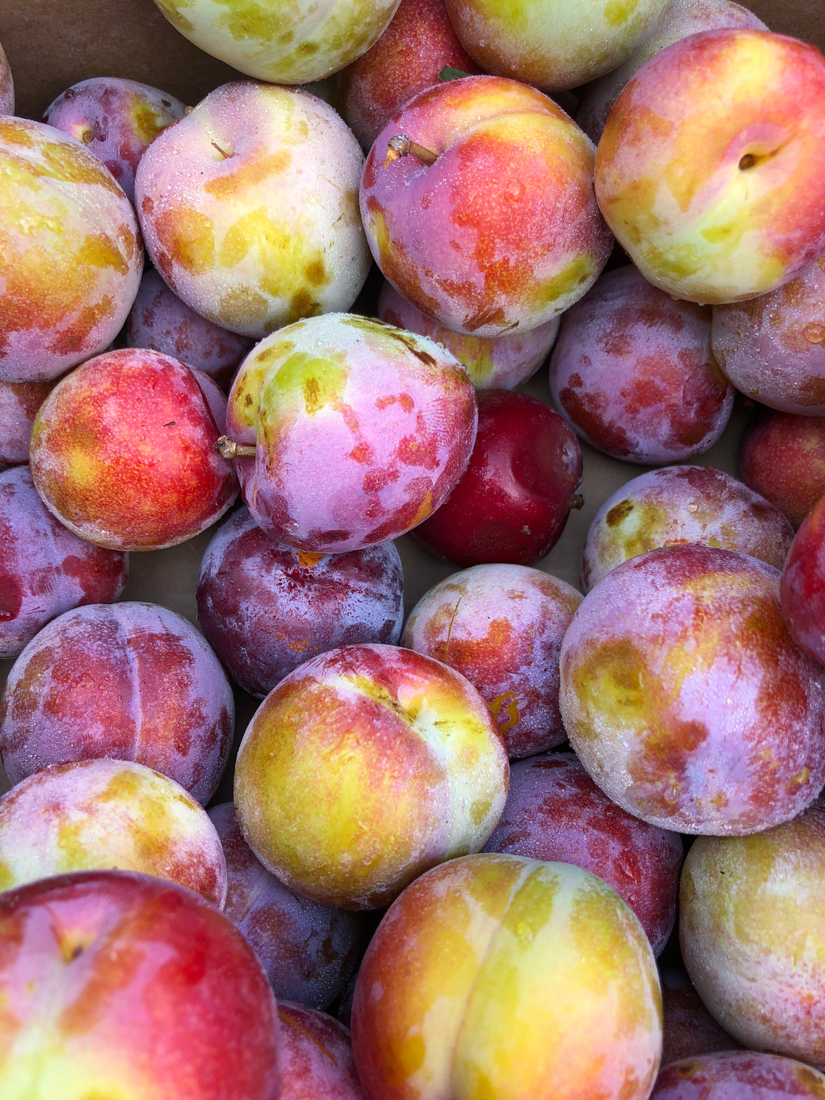 Waterloo Ozark Plums