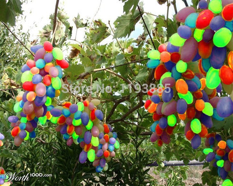 100pcs Bonsai Rainbow Grapes Seeds