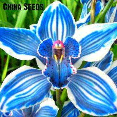 100pcs 9 varieties Rare Orchid Plant Seeds