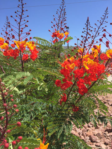 Henderson Nevada, flowers, wildlife, ShoptheKei.com