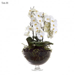 White Orchid in Round Glass Vase 1 Meter Tall