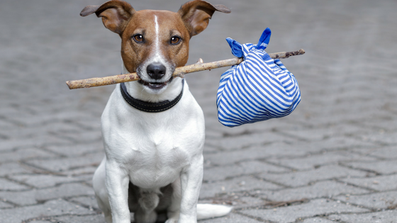 10 Essential Accessories for The Modern Dog