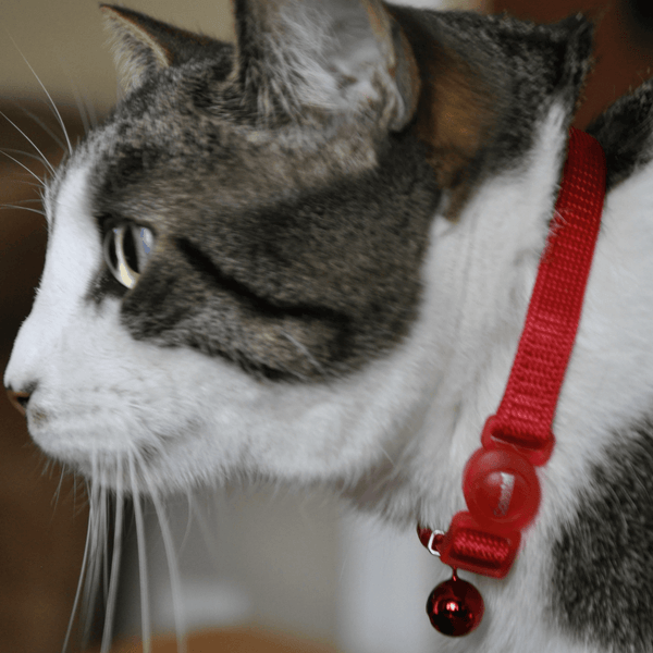 Cat collar and id tag