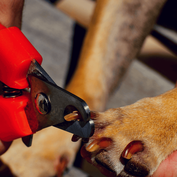 Pliers dog nail clipper cutting dog nail