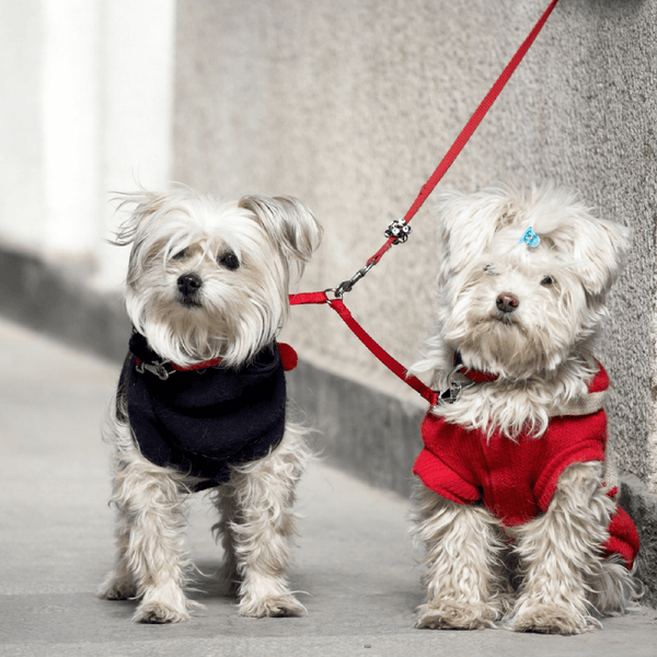 Two dogs on a street on a dog leash
