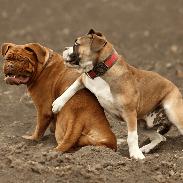 Two dogs seated with one dog putting its leg on the other dog