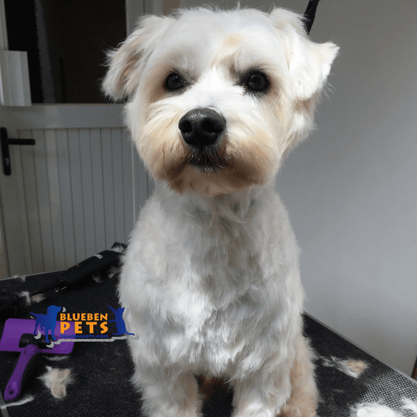 Dog grooming spa services
