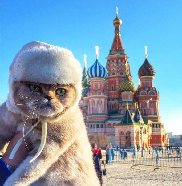 Russians are the world's biggest cat lovers!