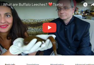 What are Buffalo Leeches?
