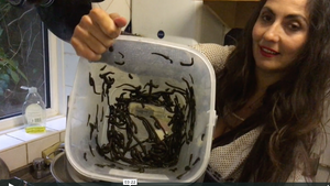 Leech Care: Cleaning Out Leeches' Water