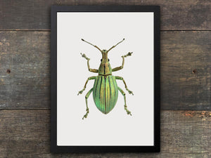 Framed Insect Print