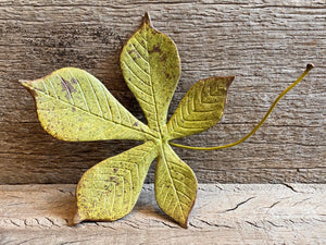 Ceramic Chestnut Leaf