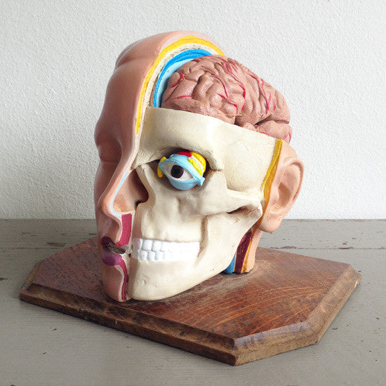 Anatomical Head Model