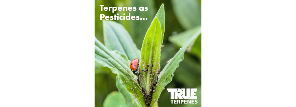 Terpenes as Pesticides