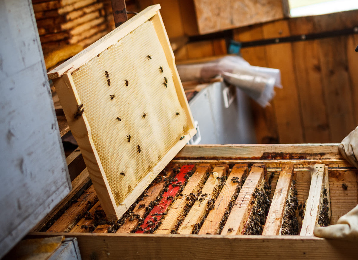 Beekeeping Frames and Foundation