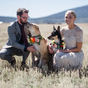 A bride and groom pose with their two dogs who have dog collars made of beautiful faux flowers arranged by Compass Rose Floral