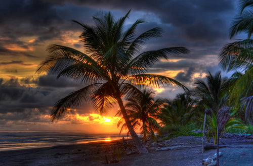 Palm Tree at Sunset 2