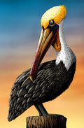 Pelican - Greeting Card