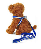 Reflective Breakaway Nylon Harness