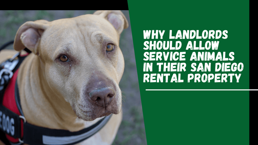 Why Landlords Should Allow Service Animals in Their San Diego Rental Property