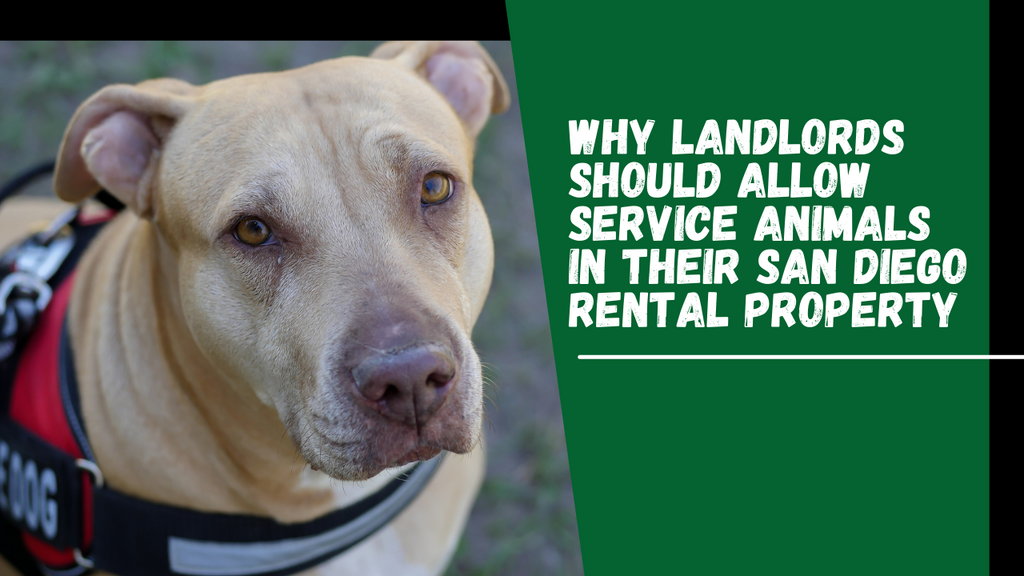 Why Landlords Should Allow Service Animals in Their San Diego Rental Property - Banner