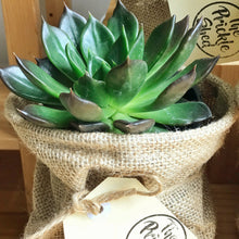 ORDER NOW - Succulent gifts - PICK UP ONLY