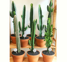 Potted Cactus - These are the BIG GUYS